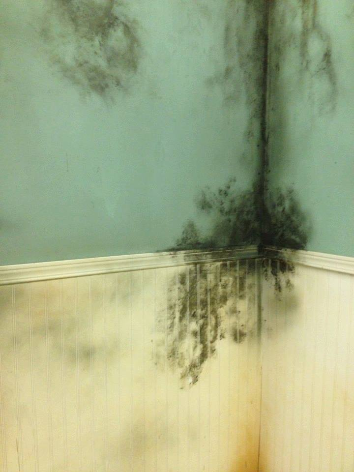 """Evil Black Mold"" from FrightTown commercial"